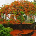 Nice Tree Near Lighthouse