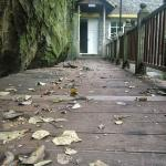 Pathway strewn with leaves