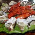 sydney rock oysters mmm fresh prawns
