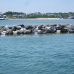 300 Harbor Seals