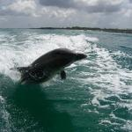 Northwest Florida Dolphin and Fishing Tours
