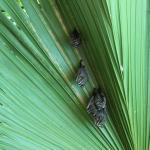 Foto di El Pequeno Gecko Verde