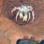 Wall Dive photo of crab
