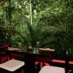 vista en la selva