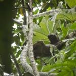 Foto de Madidi Jungle Ecolodge