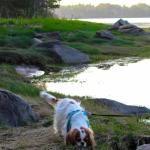 Walking Molly around the shoreline at the campground.