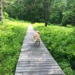 Walking around the trails.