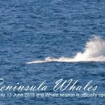 Whale season June to November