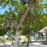 vista del bungalow 31