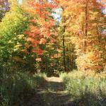 woods trail in Autumn