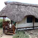 Foto de Manyara Wildlife Safari Camp