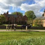 Equine guests at Whittonhall