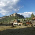 Foto de 7D Ranch