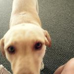 Ed's doggie, the welcome wagon!!!
