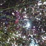 Looking up  to the sun through the shade tree.