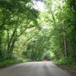 Foto de St. Francois State Park