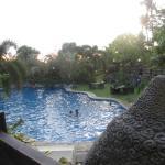 Foto de Cintai by Corito's Garden