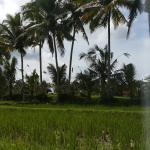 Landscape - Bakung Ubud Resort and Villa Photo