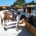 Ranch la Camargue