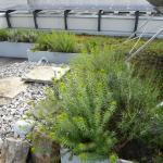 eco-friendly roof garden