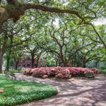 Pulaski Square's late blooming Pink Azalea's should defintely make you visit Savannah in May!