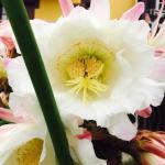 Beautiful cactus flowers at Toki Alai Restaurant