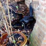 Birdie in the garden, oblivious to us