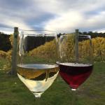 Photo de Bruny Island Premium Wines