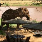 Elephant wondering through the camp :)