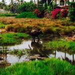 Foto de Nanu Resort Goa