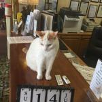 Lovely hotel cat ( 20 )....