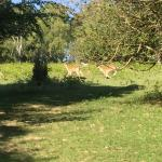Great to see deer roaming right through campsite