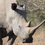 Rhino reigning supreme...