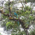 Resplended quetzals - across the road from the Lodge. 4 of them on 1 tree, definately my highlig
