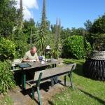 Icart Tea Gardens