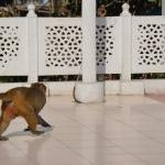 Monkeys stopped by daily on the terrace outside my room