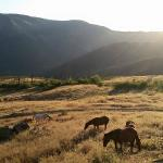 back porch view of horses and sunrise
