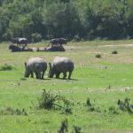 Buffalo Hills - so much wild life right in front of you!