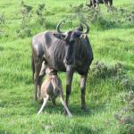 Buffalo Hills mum & baby