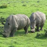 Buffalo Hills Rhino family