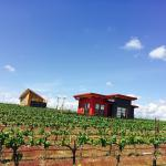 Our Tiny Houses nestled in the vineyard.