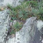vegetação litorânea