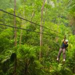 Zip-line through the lush forest