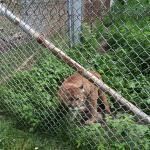 Foto de Zoo de St-Edouard