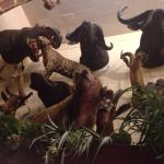 Exotic animals of all kinds!