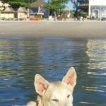 bar, beach and beach (the dog)