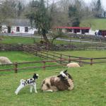 Glendeer Pet Farm Foto