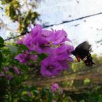Samui Butterfly Garden