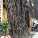 Hanoi l'Elégante