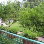 jardin vu de la chambre